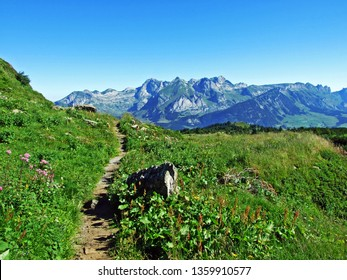Alpine pastures and meadows on the slopes of the Alviergruppe mountain range - Canton of St. Gallen, Switzerland