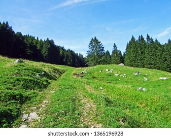 Alpine pastures and meadows on the slopes of Alpstein mountain range - Canton of St. Gallen, Switzerland