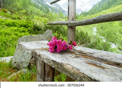 alpine roses on wooden bench