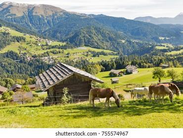 Alpine rural landscape with grazing horses. Western Carinthia, Austria.