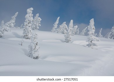 Alpine slope with pine tree covered snow
