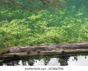 alpine small lake with acquatic plants and fallen tree