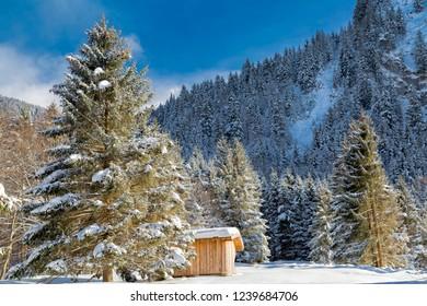 Alpine in the snow