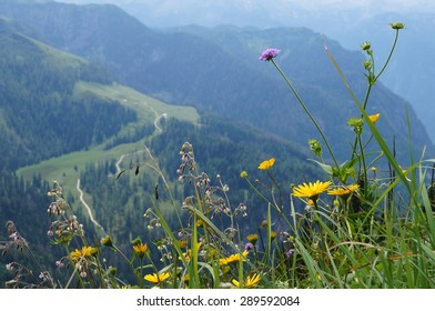 Alpine Summer Flowers