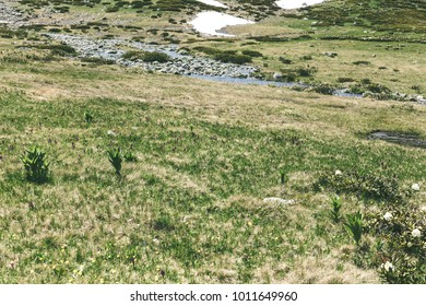 Alpine summer meadows, Landscape with glades, rivers. Idyllic scene of high mountains, highlands in the summer season.
