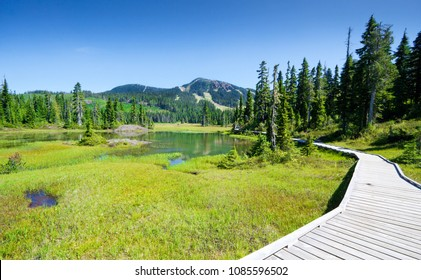 Alpine Trail and Meadow, Strathcona Provincial Park, Vancouver Island, British columbia, Canada