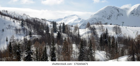 Alpine trees in the Alps Slovenia