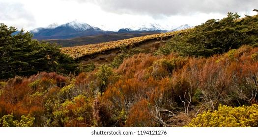 Alpine vegetation in Tongario National Park New Zealand from Mount Ruapehu