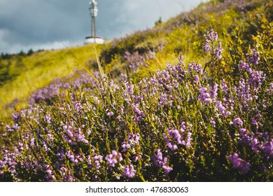 Alpine wild flowers in the wind with a transmitter tower in background