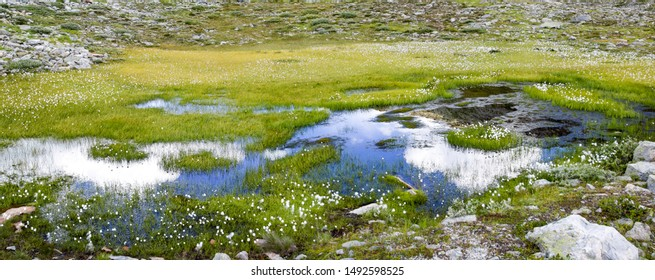 Alps mountain lake with cottengrass in summer - Maejelensee Lake in Fiesch, Switzerland