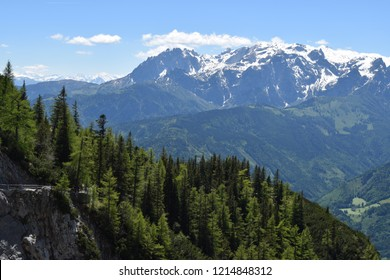 Alps mountain slopes with fir trees