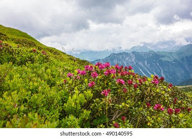 Alps mountain top in the summer in green vegetation and flowers