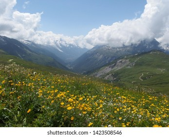 Alps, Tour du Mont Blanc - view with yellow flowers on the Col de Balme pass on the Franco-Swiss border