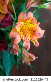 Alstroemeria flowers background. Alstroemeria (Peruvian Lily, Lily of the Incas). Flowers Alstroemeria. Bouquet of alstroemeria flowers (orange, pink, purple, red) on wooded background