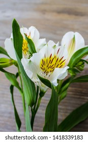 Alstroemeria flowers background. Alstroemeria (Peruvian Lily, Lily of the Incas). Flowers Alstroemeria. Bouquet of alstroemeria flowers on wooded background