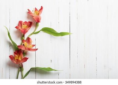 Alstroemeria flowers on white wooden backgro