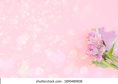 Alstroemeria pink on a pink background. The spring theme.