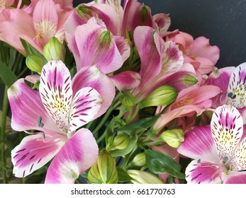 alstroemerias on black background. pink and purple alstroemerias. alstroemeria texture. many alstroemerias
