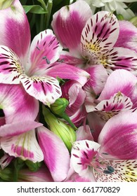 alstroemerias. pink and purple alstroemerias. alstroemeria texture. many alstroemerias