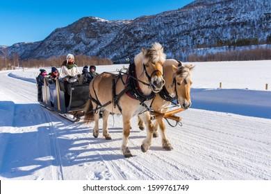 Alta, Norway, 03/25/201: sleigh ride by Norwegian Fjord Horses near Alta