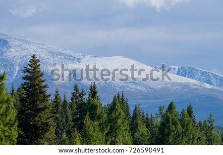 Altai mountains and taiga forest