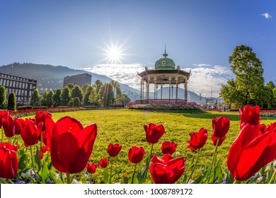 Altan with red tulips in Bergen, Norway
