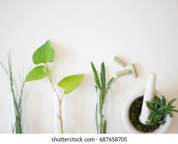 alternative medicine herb , mortar, laboratory glassware, plant in tube, flower , on white background.