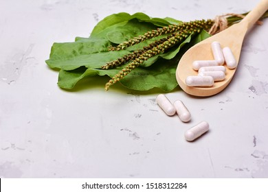 Alternative medicine, naturopathy and dietary supplement. Herbal remedy in capsules and plants over white background. Side view with copy space