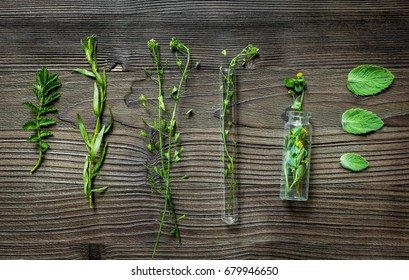 Alternative medicine. Store up medicinal herbs. Herbs on wooden table background