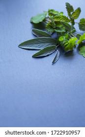 Alterntive herbal medicine -  herbal remedies, emedicinal plants -  mint, lemon balm, sage, feverfew. Creative idea, copy space, dark slate background with copy space.