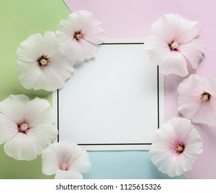 althaea rosea flower with card