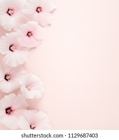 Althaea rosea flower on pink background