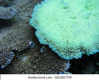 Although coral bleaching can be caused by a variety of events, the leading cause of coral bleaching is increased ocean temperature caused by climate change.