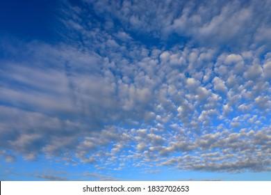 Altocumulus floccus clouds  in blue sky