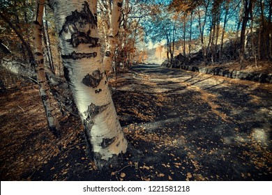Altomontana path crosses autumnal birch trees in Etna Park, Sicily
