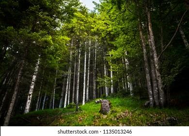Altopiano di Asiago - Into the wood