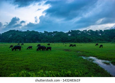 Aluva Sivarathri Manapuram Kerala India