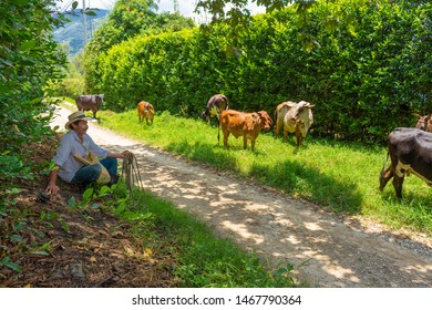 Amaga, Antioquia / Colombia. March 31, 2019. Group of cows standing in a grassy field.