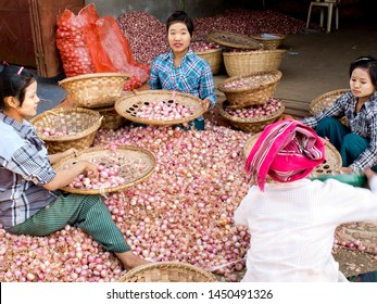 Amanapura, U Bein Bridge, Myanmar ( Burma) - January 15th 2016 : Three young women with tanaka make-up seat in a pile of pink onions, selecting their size in and wicker basket  putting them in bags.