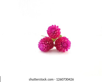 Amaranth flowers isolated from white background.