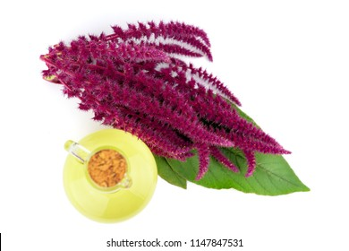 Amaranth Plant Oil in a Glass Jug. Also Amaranthus, Amarant, Amarantos or Pigweed. Isolated on White Background.