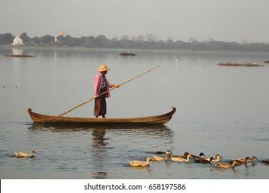 Amarapura,Myanmar - February 20 2016 : Man punting and controlling his ducks in river.
