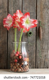 Amaryllis in big glass vase, planter with dried cones, chestnuts, acorns, nuts, red small fresh apples, vintage metal cone on dark aged wooden background, floral composition, arrangement, daylight