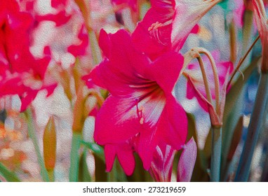 Amaryllis Flower with filled color filter