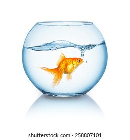 amazed looking goldfish in a fishbowl
