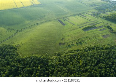Amazing aerial view of spring forest