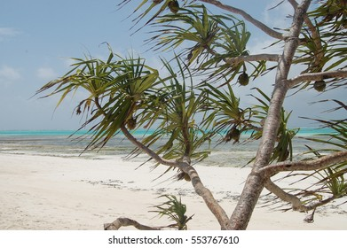 amazing african beach with palms and horizon on the background, Zanzibar, Africa