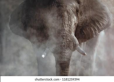Erstaunlicher afrikanischer Elefant mit Staub. Grosses Elefantenmännchen vor der Kamera. Tierwelt mit gefährlichen Tieren. Grosser Tusker in der Natur Lebensraum. Loxodonta africana.