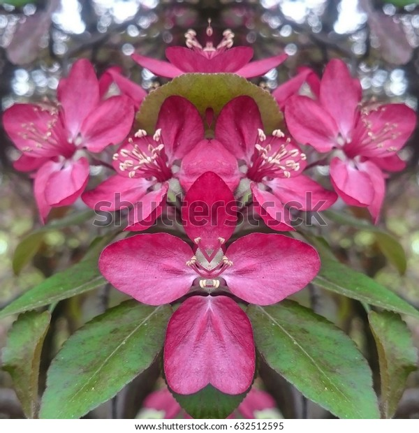 amazing aromatic cherry apple flowers in full blossom, a mirror reflection creative image, springtime in Europe