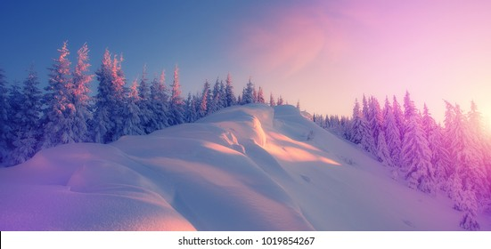 Amazing athmospheric Landscape. winter scenery at sunset. instagram filter. postcard. Snow covered  tree under sunlight. Sunlight sparkling in the snow. instagram filter. winter nature background.